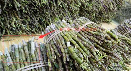 一段白杆一段绿杆(不是交错的)的是铁皮石斛