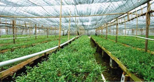 铁皮石斛的寿命与种苗,种植环境,日常养护息息相关。