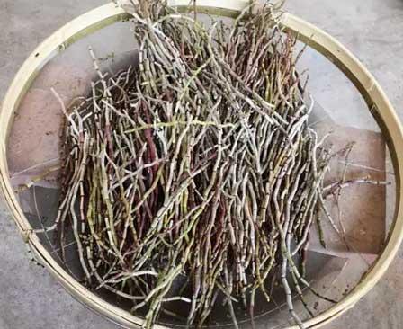 铁皮石斛烘培