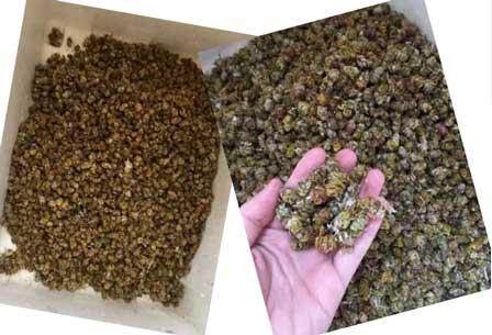 铁皮石斛分类处理