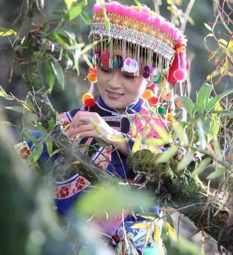 龙陵紫皮石斛图片