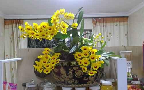 鼓槌石斛盆栽图片