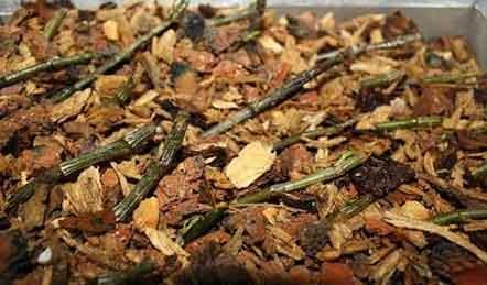 石斛的种植方法及繁殖视频图片