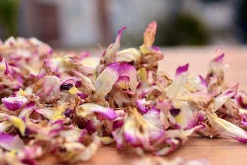 赤水金钗石斛花图片