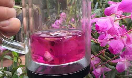 金钗石斛花泡水图片