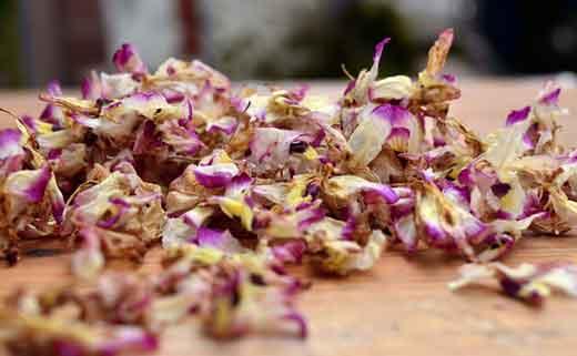 金钗石斛干花图片