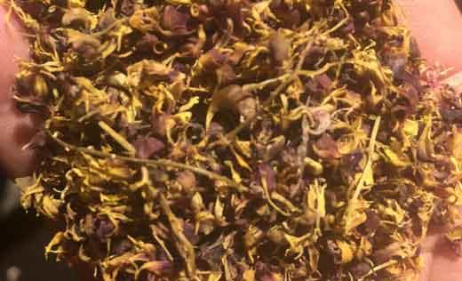 珍虫石斛花图片