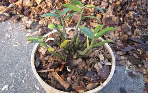 石斛种植基质图片