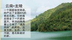 云南龙陵铁皮石斛种植批