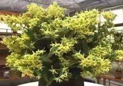 家里养殖盆栽花卉的的好