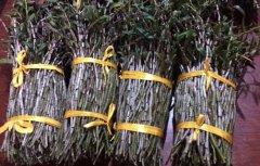 黑节草的功效,黑节草多少钱一斤