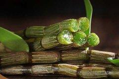 石斛不能和什么药材同食