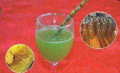 新鲜铁皮石斛怎么榨汁食用