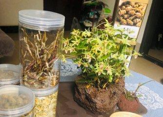 石斛和石斛花哪个价格更贵?
